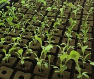 پشم سنگ کشاورزی